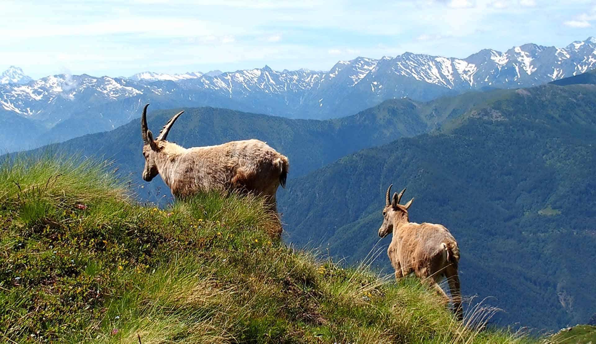 Hotel con centro benessere Aosta